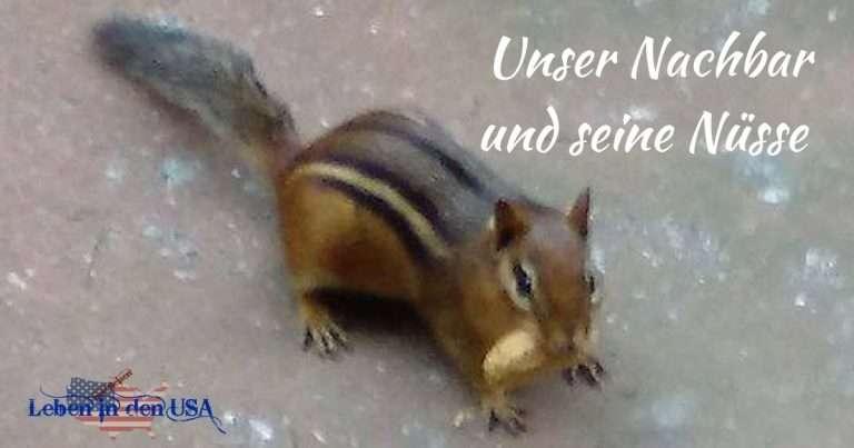 Chipmunk im Garten – Einfach putzig dieses Streifenhörnchen