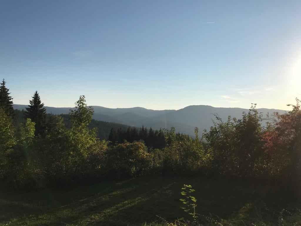 Natur im bayerischem Wald